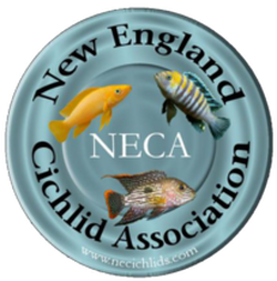 New England Cichlid Association